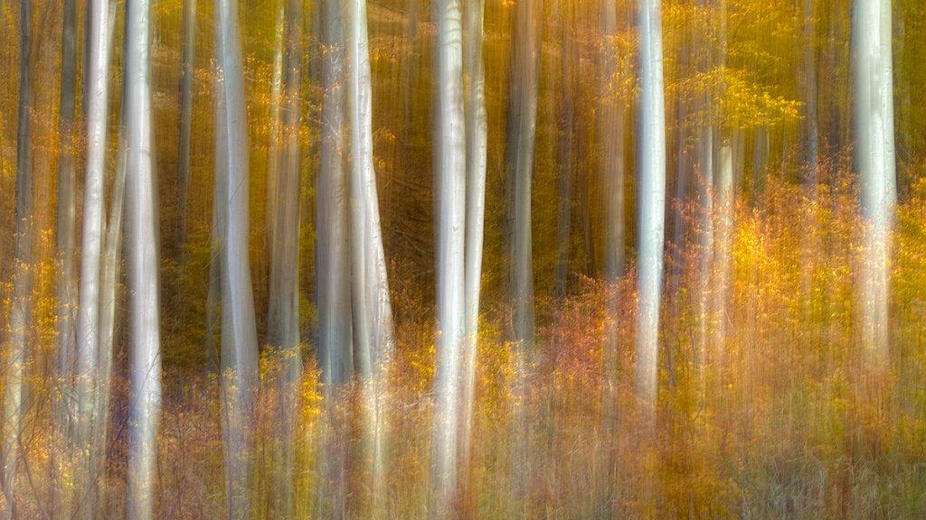 deep-forest.jpg